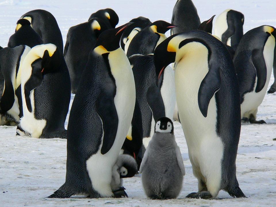 Comment préparer sa croisière en antarctique