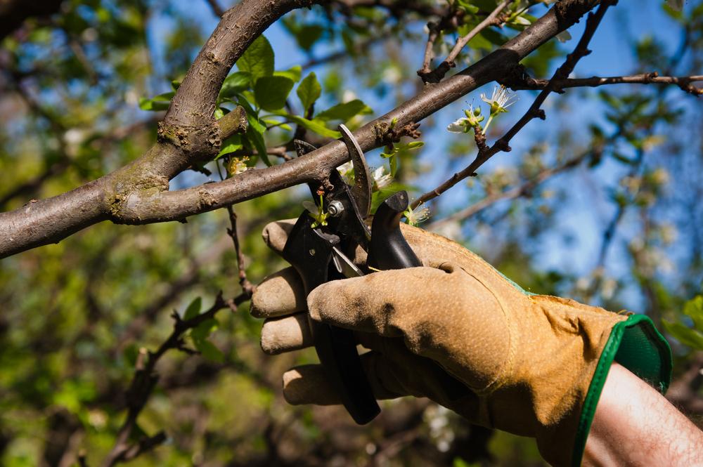 tailler un arbre
